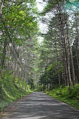 桜清水オートキャンプ場の木立