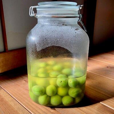 梅酵母ジュース