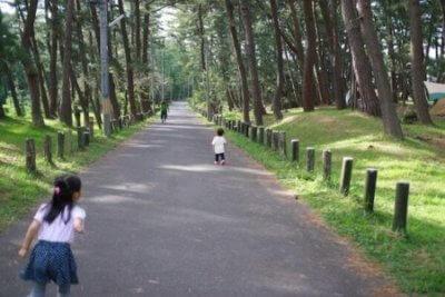 広い林間サイトの道路