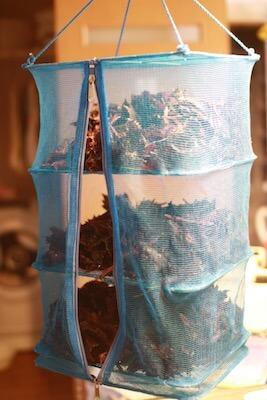 野菜干し網で干しで干した赤シソ
