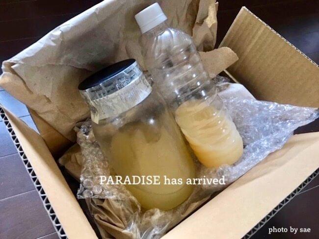 箱から出したパラダイス酵母