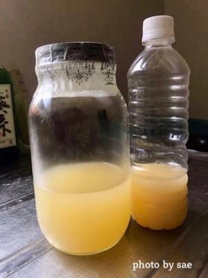 瓶とペットボトルのパラダイス酵母